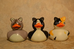 Cat Ducks